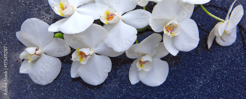 In de dag Spa Spa background with white orchid.