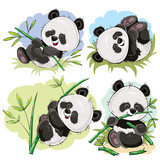 Funny panda bear baby playing on grass, climbing on bamboo stem, eating bamboo branch cartoon vectors set isolated on white background. Cute wild animal character for kids books illustrating, zoo ad - 175620033