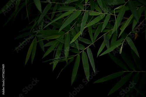 Dark bamboo leaves for background