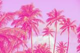 palmiers, style pop art - 175627840