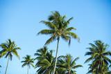 palmiers en polynésie, tahiti  - 175629048