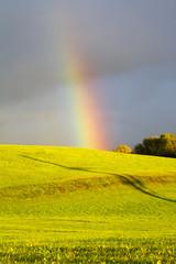 Regenbogen - Hochformat - bunt - Allgäu - Wiese - Licht