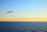 Seascape with flying seagulls - 175637086