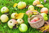 Apples with basket on the grass in autumn - 175638062