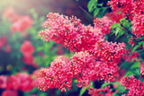 Blossoming lilac flowers. Floral background. - 175639289