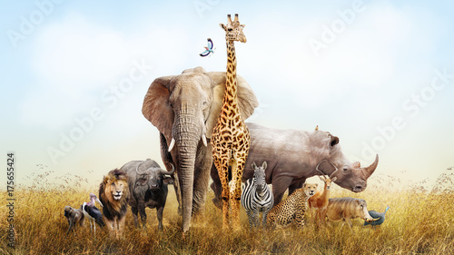 obraz lub plakat Safari Animals in Africa Composite