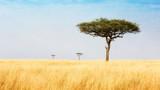 Trees in Grasslands of Kenya Africa