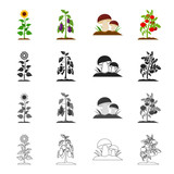 Meadow, forest, plot and other web icon in cartoon style.Raspberries, fruits, vegetables icons in set collection. - 175667206
