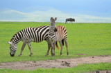 The African animals. Tanzania - 175675694