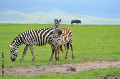 The African animals. Tanzania