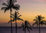 Tropical palm trees during sunset - 175678083