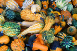 pile of gourd in autumn harvest season - 175689669