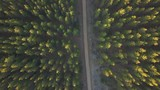Aerial view of pine forest with sunlight shine through - 175690468