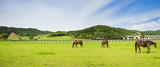 北海道 サラブレッド 放牧風景 - 175693641