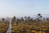 The sun Latvia.Dunikas swamp and mist rises - 175694804