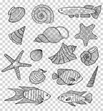 Set of shells and fishes