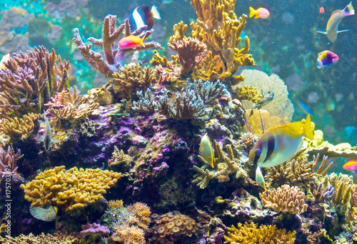 spiny coral with fishes Poster