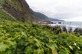 vineyard in madeira island - 175710676