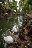 Tropical garden Monte Palace - 175713836