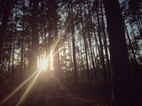 sun behind trees in a forest during autumn - 175723839