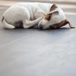 Puppy sleeping