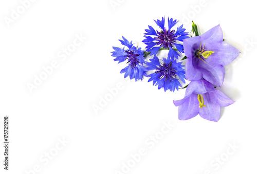Violet blue bell flowers campanula persicifolia peach leaved violet blue bell flowers campanula persicifolia peach leaved bellflower and cornflower mightylinksfo