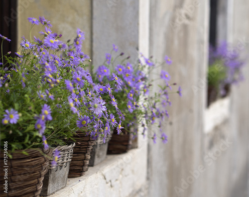 Deurstickers Venetie Purple Wall Flower Baskets