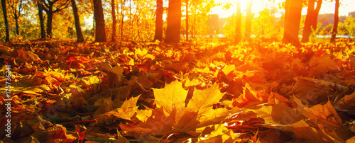 autumn trees on sun - 175736241