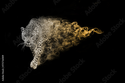 Leopard one of the big five animals you must see in africa animal kingdom collec Poster