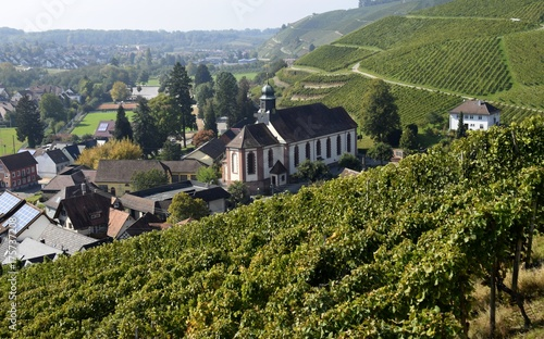 Deurstickers Wijngaard view across the vineyards of Baden Germany, towards the church in Durbach, Ortenau region of Germany
