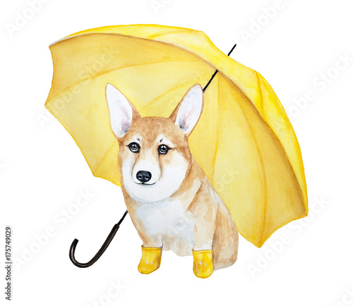 A cute corgi dog with big brown eyes in yellow rubber boots under a yellow umbrella. Watercolor illustration isolated on a white background. - 175749029