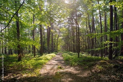Foto op Canvas Weg in bos path in german forest