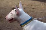 Dog show.Kiev,Ukraine. - 175756471