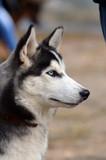 Dog show.Kiev,Ukraine. - 175756479