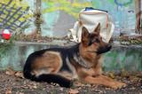 Dog show.Kiev,Ukraine. - 175756485