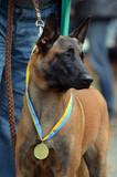 Dog show.Kiev,Ukraine. - 175756491