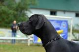 Dog show.Kiev,Ukraine - 175756649