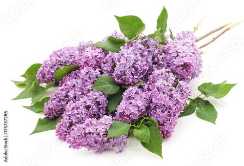 Bouquet of lilac. Plakat