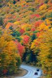Autumn foliage - 175757452