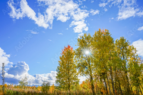Tuinposter Herfst Autumn landscape: colorful trees, blue sky and the sun
