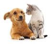 Kitten and puppy.