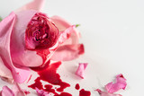 cut rose blossom, blood and petals on a bright gray background, concept for the international day of zero tolerance for female genital mutilation, 6 february - 175764231