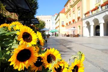 Słoneczniki i widok na miasto