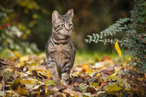 Junge Katze im Herbstlaub