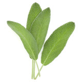 Sage leaves isolated on white background cutout. - 175774245
