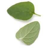 Oregano or marjoram leaves isolated on white background cutout - 175782843
