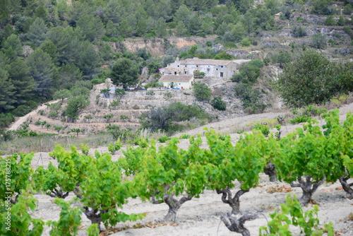 Tuinposter Khaki Weinfeld, Weinreben in Spanien