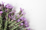 Directly above view of Spanish lavender on white background with copy space - 175788458