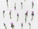 High angle full frame view of lavender flowers with stems arranged on white background - 175788465