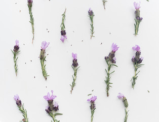 High angle full frame view of lavender flowers with stems arranged on white background